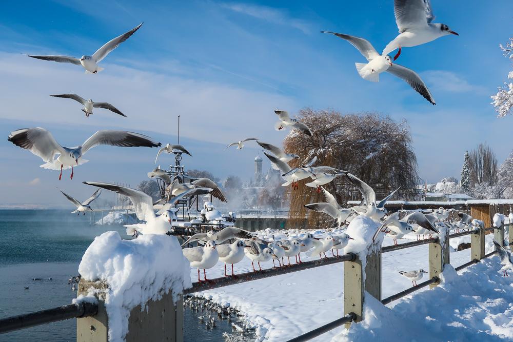 Sightseeing Walk Snow Lake Constance Friedrichshafen January 2021 Blog JoyDellaVita